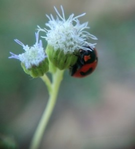 Kepik + Bunga Rumput